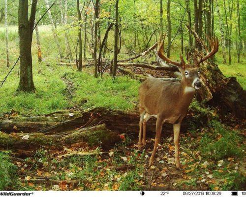 wildguarderwatcher128-1.jpg